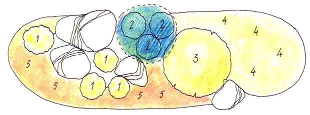 Цветник для сухой тени - схема