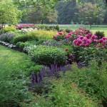 Миксбордеры – искусство комбинирования растений