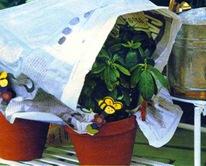 Затенение растений от солнца