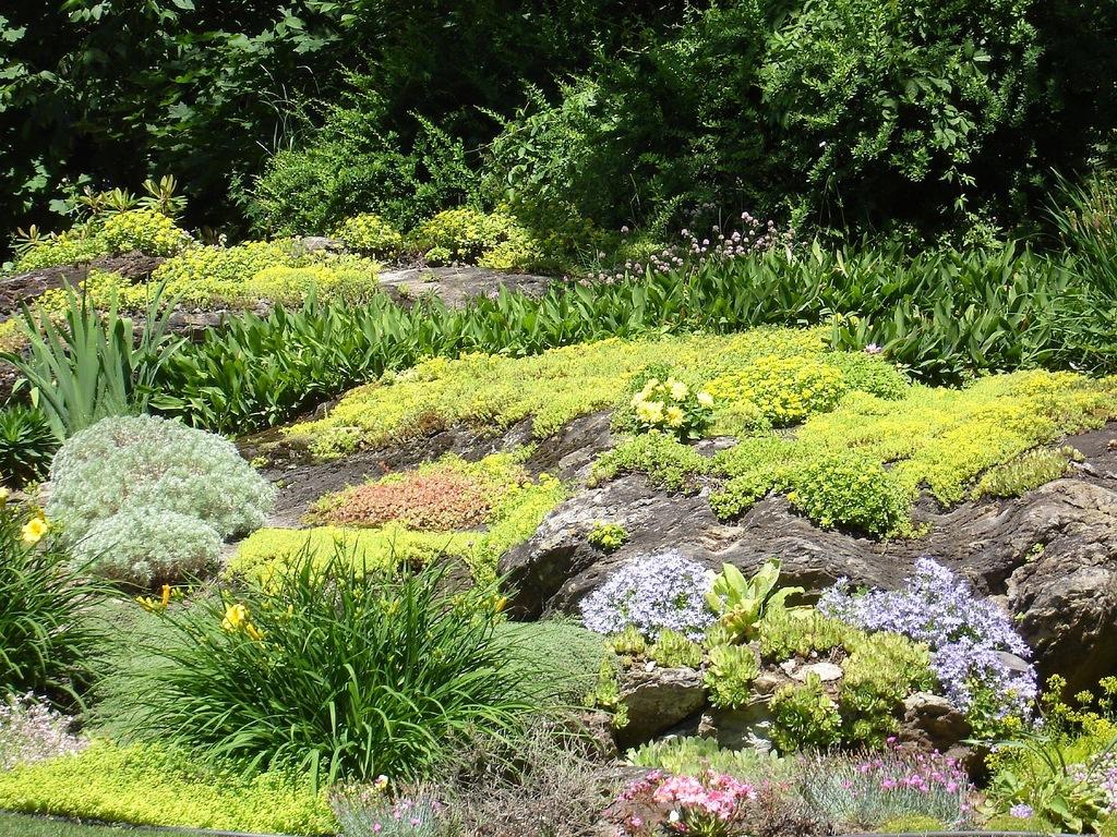 цветы для альпийских горок фото: