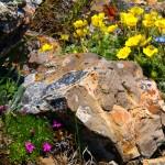Альпийская горка – сад среди камней