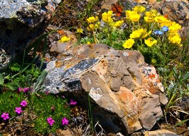 Альпийский каменистый сад