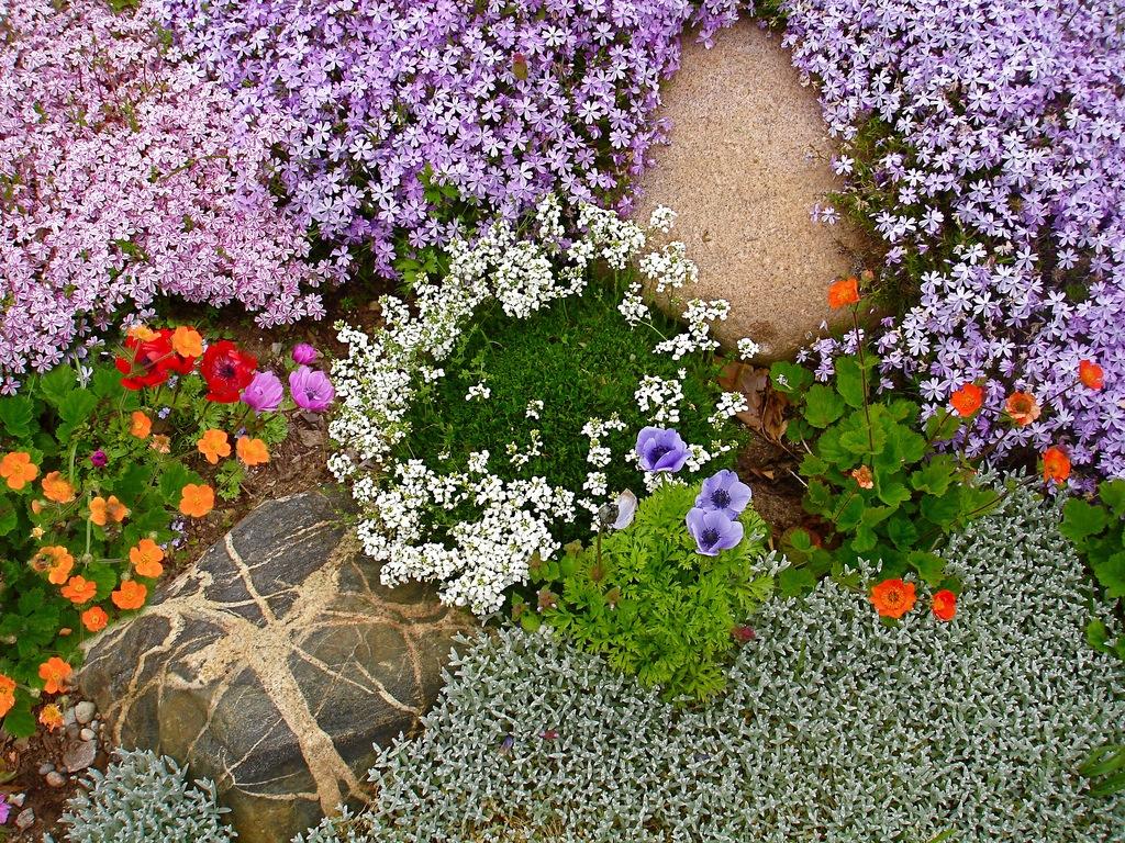 Растения для альпийские горки фото своими руками