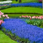 """Синий сад – """"зеркало неба"""""""