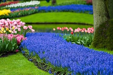 Синие и голубые цветы