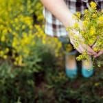 Непрошенные гости в цветнике – сорняки