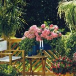 Летний курорт для комнатных растений
