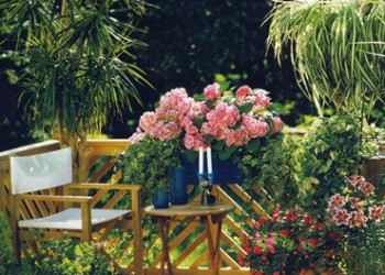 Комнатные растения на свежем воздухе