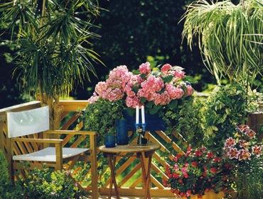 Комнатные растения летом