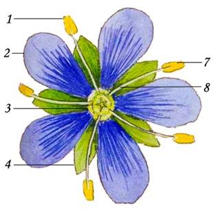 cvetok2