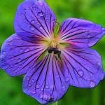 Как устроен цветок?