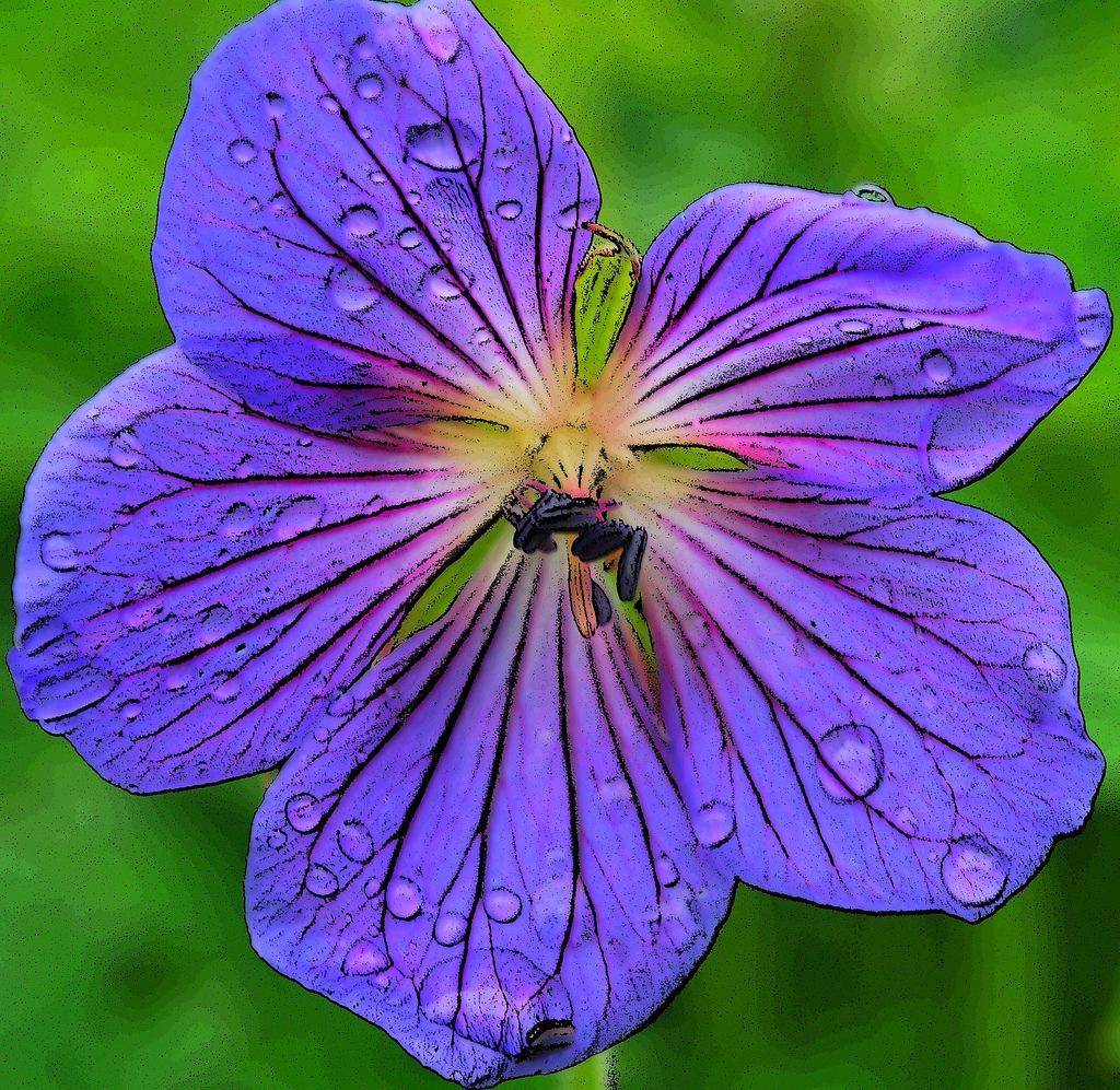 08 10 теги ботанические сведения