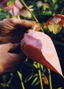 Гибридизация - защита семян