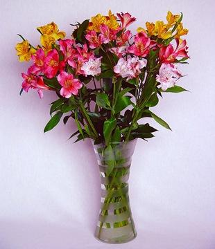 Альстромерия - язык цветов