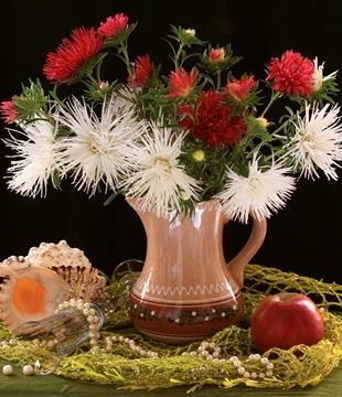 Астра  - язык цветов