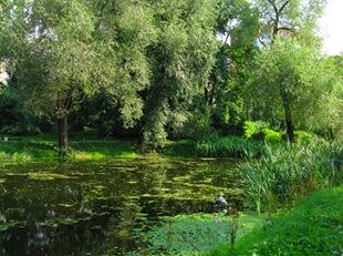 Пруд в Аптекарском саду при Ботаническом саде МГУ