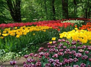 Тюльпаны - весна в малом ботаническом саду МГУ