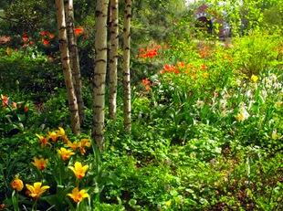 Цветение луковичных в аптекарском саду