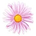 Простые цветки у астры