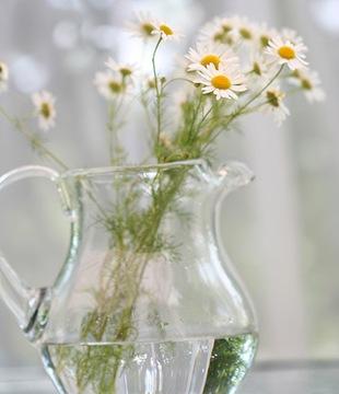 Ромашка - язык цветов