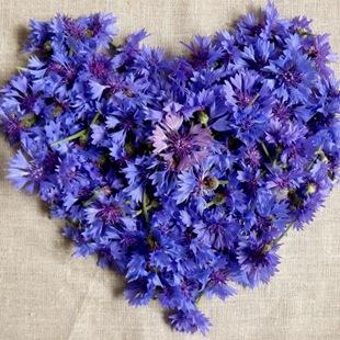 Василек - язык цветов