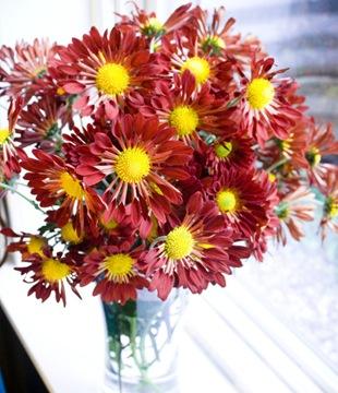 Хризантема - язык цветов