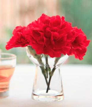 Гвоздика - язык цветов
