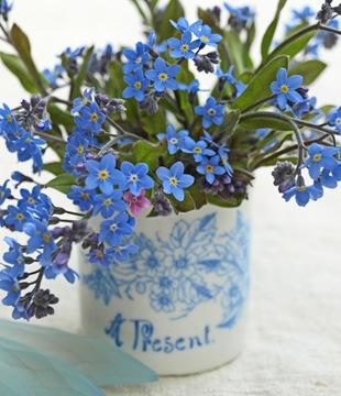 Незабудка - язык цветов