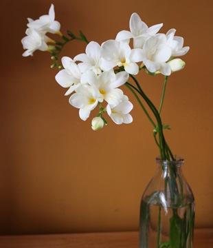 Фрезия  - язык цветов