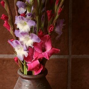 Гладиолус  - язык цветов