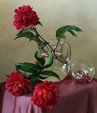 Пионы - язык цветов