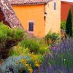 Цветник в стиле французского Прованса
