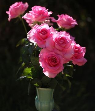 Розова роза - язык цветов