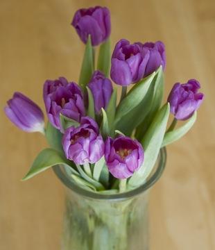 Тюльпаны  - язык цветов