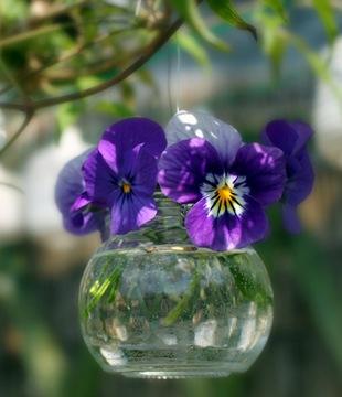 Фиалки - язык цветов