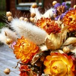 Сухоцветы из собственного сада