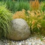 Декоративные злаки в вашем саду