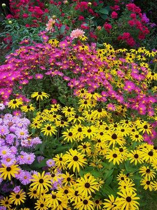 Осенний цветник с хризантемами, астрами и рудбекиями