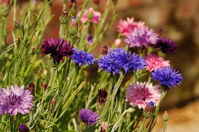 Конспект на тему Цветы
