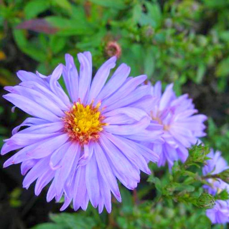 Цветы у калитки