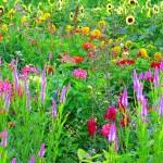 Кантри-цветник: деревенская непосредственность