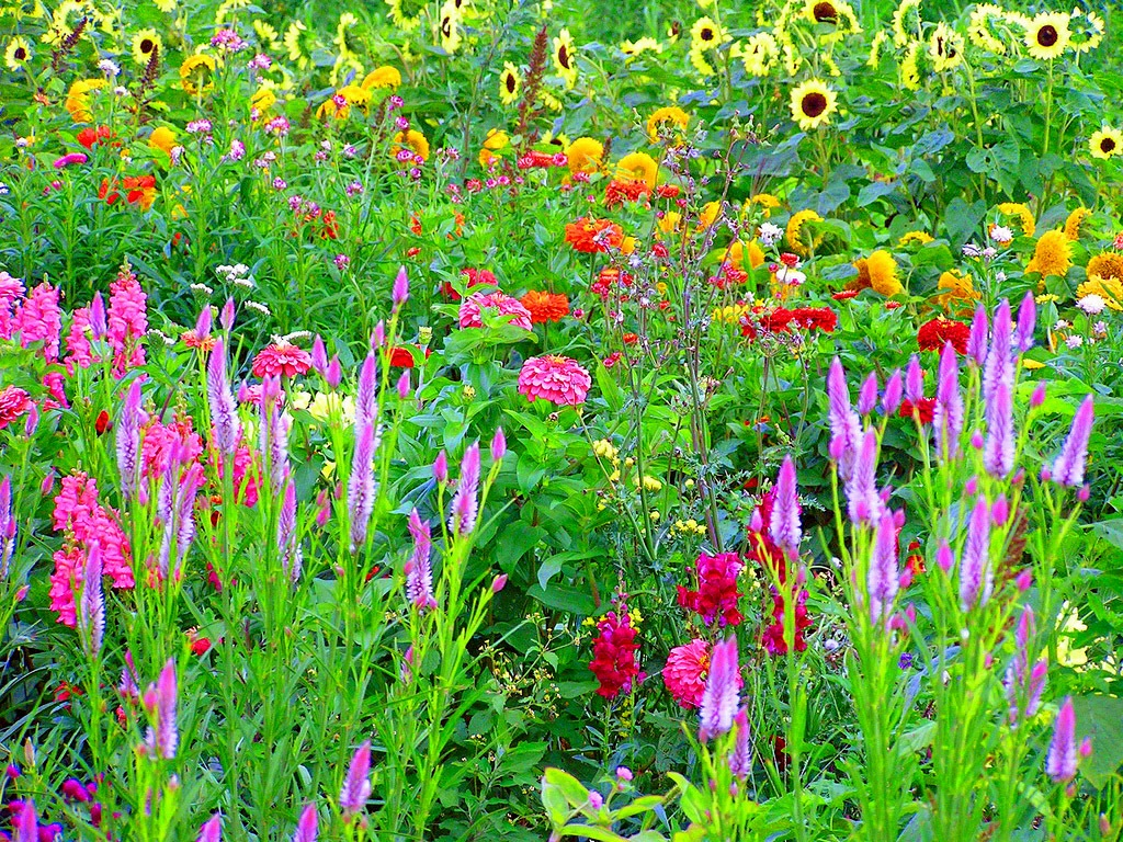 Сад в деревенском стиле оформляется такими растениями, за которым не