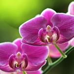Орхидея: пожелтел лист – что делать?