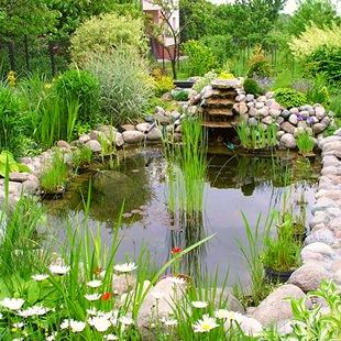 Растения для большого водоема