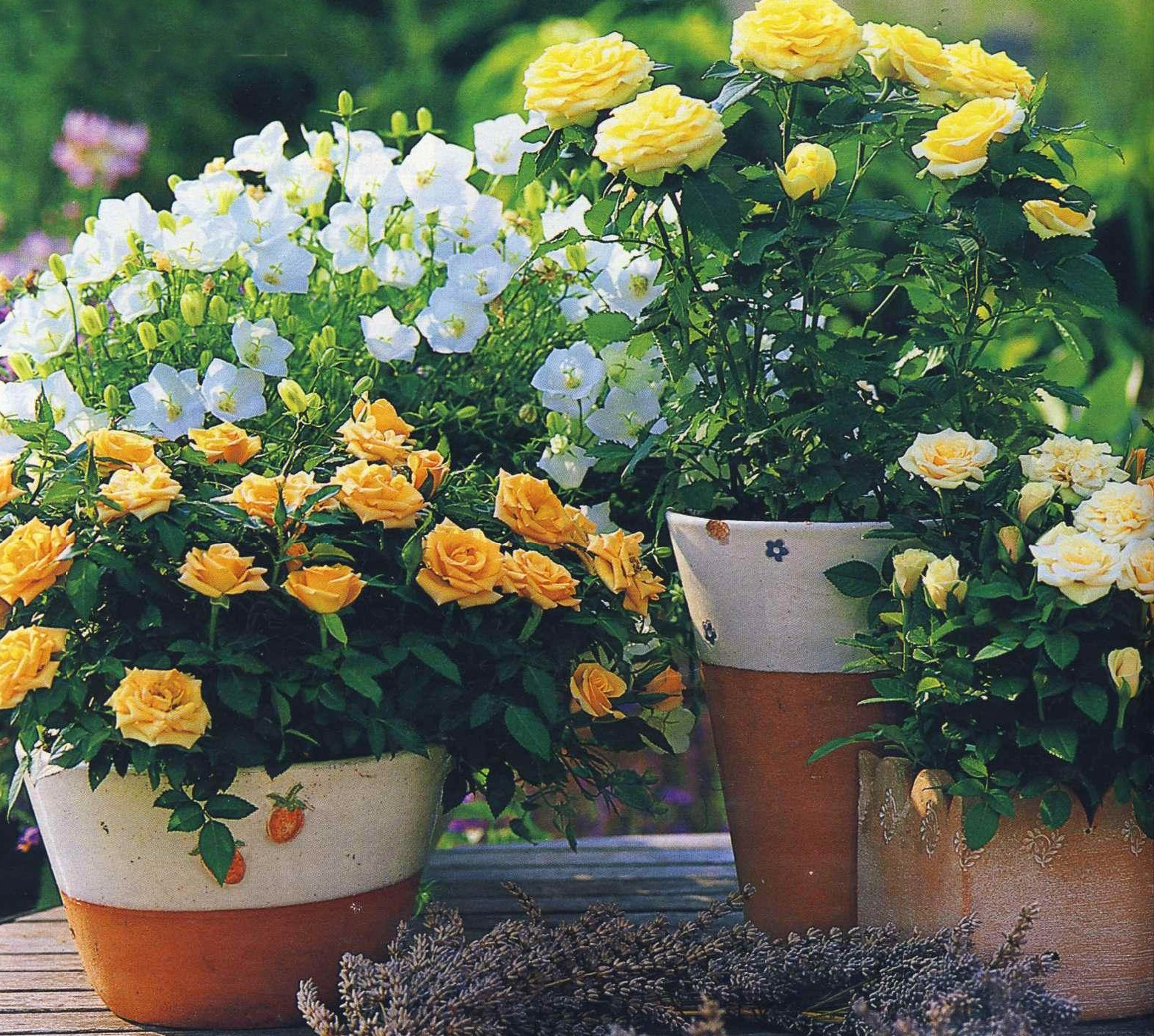 Подарили розы уход