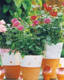 Розы в горшках розовые