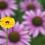 Цветник, полезный для здоровья