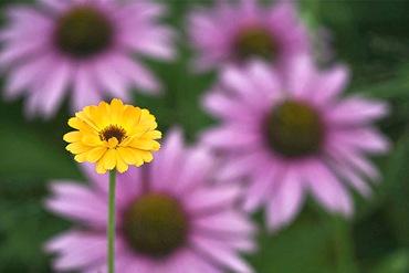 Цветник из лекарственных цветов