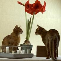 Гиппеаструм и кошки