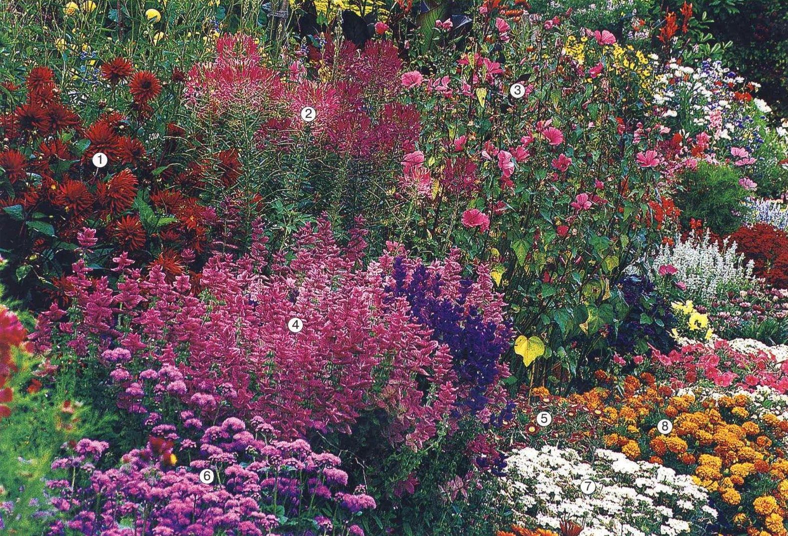 нолана  цветы